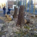 Как пилить деревья, не нарушая законы