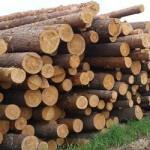 Кому положен бесплатный лес для строительства домов