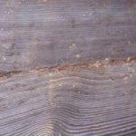 Коррозия древесины