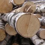 Обработка и применение березовой древесины