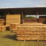 Предварительная обработка хвойной древесины