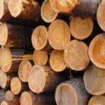 Пропаривание древесины
