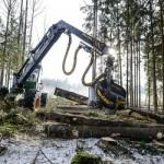 Сибирская древесина направляется к черным лесорубам